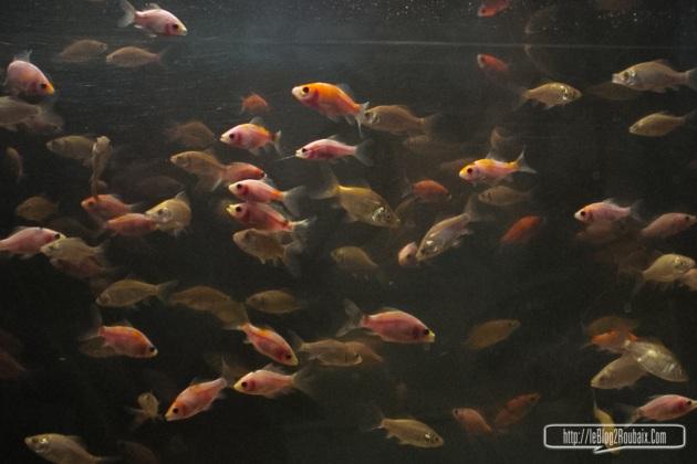 poissons_cqh-1